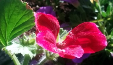 Red and Green in the Sun 1
