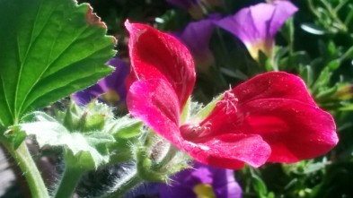 Red and Green in the Sun 2