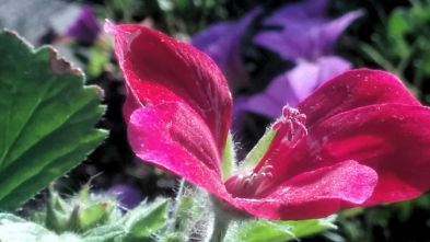 Red and Green in the Sun 3