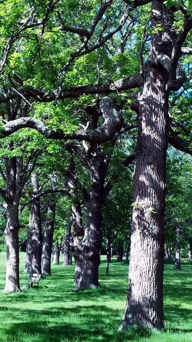 Medusa's Arbor in Late Spring 1