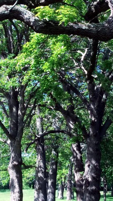 Medusa's Arbor in Late Spring 2