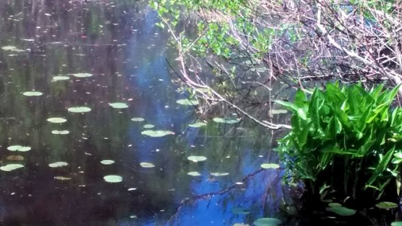 Green on Pond 3