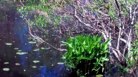 Green on Pond 4