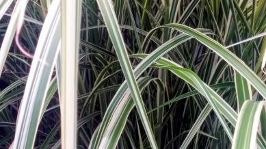 Striped Grass 2