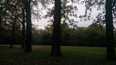 Medusa's Arbor in Fall 1