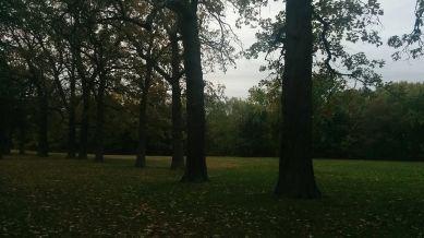 Medusa's Arbor in Fall 2