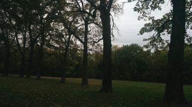 Medusa's Arbor in Fall 3
