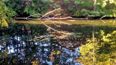 Early-Fall Reflections in Mystic River 2