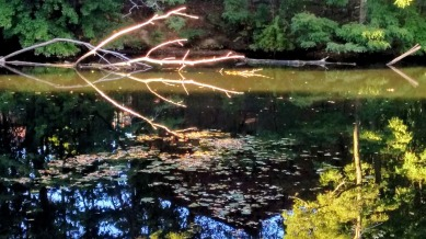 Early-Fall Reflections in Mystic River 3