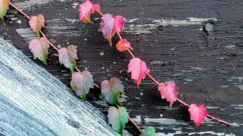 Weeds in Autumn 1b