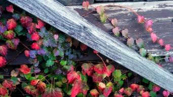 Weeds in Autumn 2