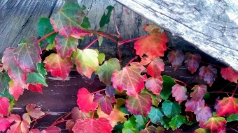 Weeds in Autumn 3