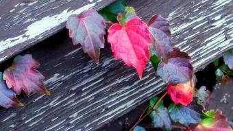 Weeds in Autumn 5
