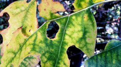 Autumn Green 1