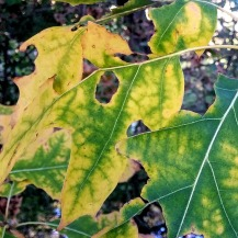Autumn Green 2