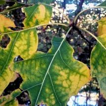 Autumn Green 3