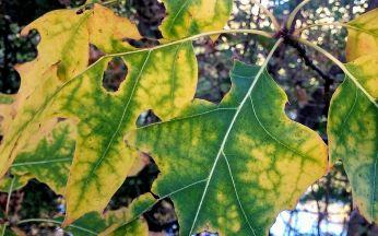 Autumn Green 4