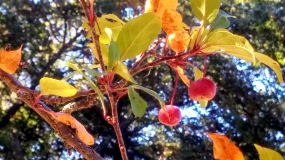 Berries among Leaves B