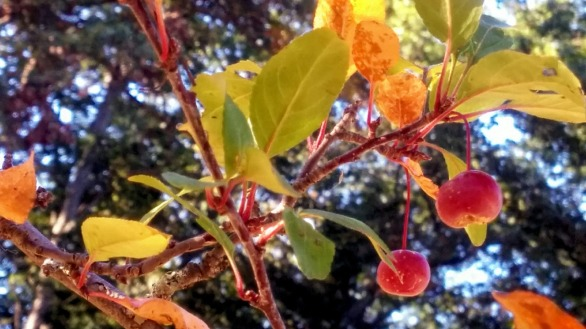 Berries among Leaves A