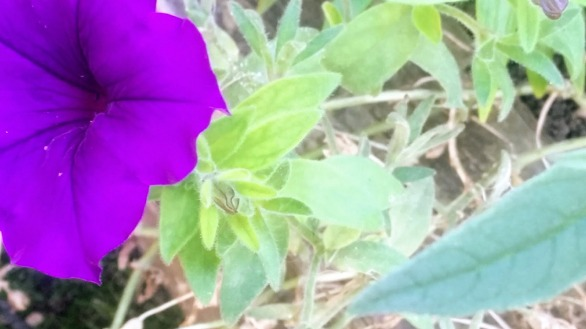 Purple on Green, Experiment 2e
