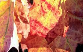 Fall Fashions 12a