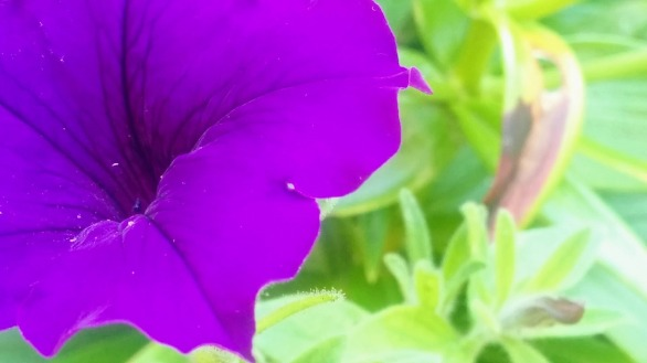 Purple on Green, Experiment 4