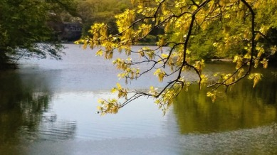 Spring over Mystic River 3
