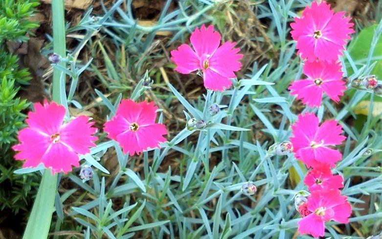 Springfest, Pink 2