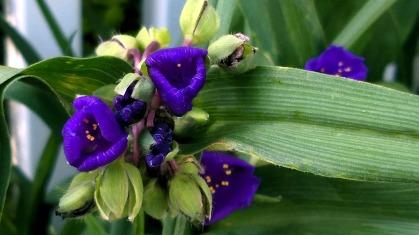 Springfest, Purple 1
