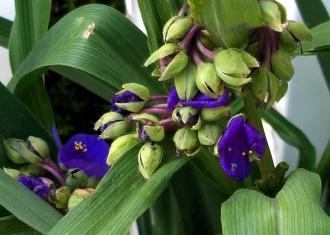 Springfest, Purple 2B