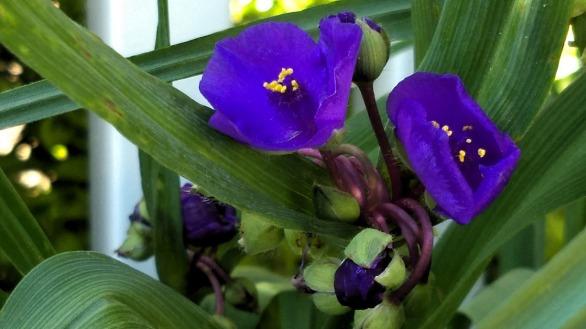 Springfest, Purple 3