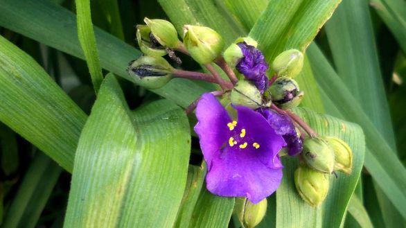 Springfest, Purple 4