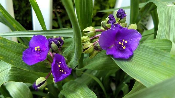 Springfest, Purple 5