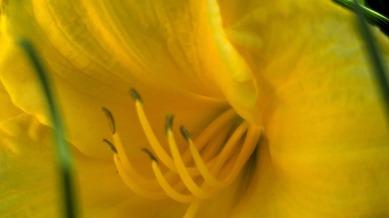 Yellow Ecstasy 2a
