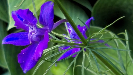 Summer Purple 4