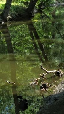 Muddy River 2