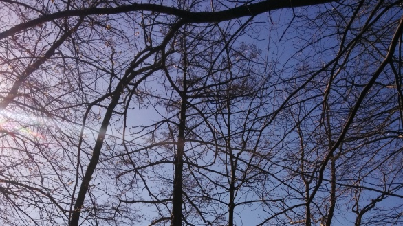 Branches and the Sun 3