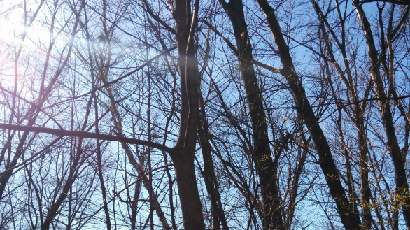 Branches and the Sun 2