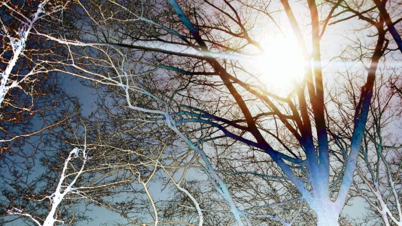 Branches and the Sun 1 (Mystical)