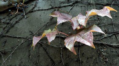 Fall Decoration 1