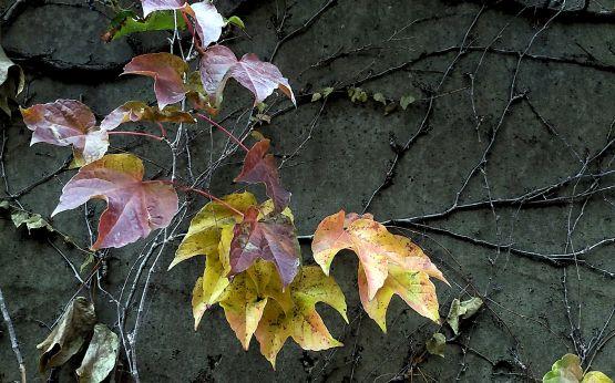 Fall Decoration 3a