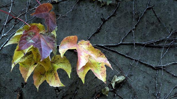 Fall Decoration 3b