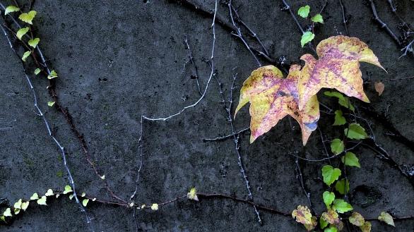 Fall Decoration 5a