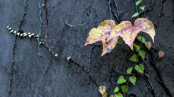 Fall Decoration 5b