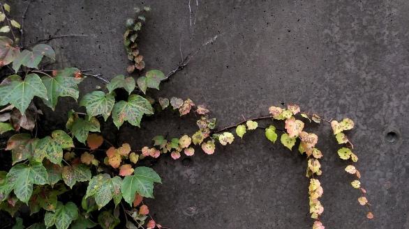 Fall Decoration 7