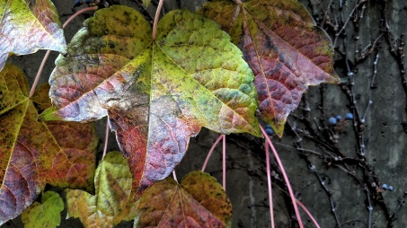 Fall Decoration 9b