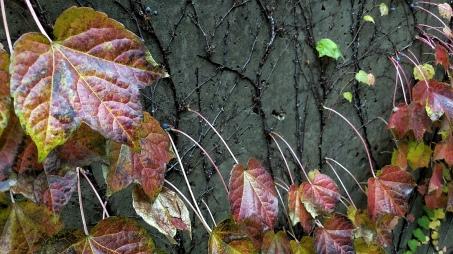 Fall Decoration 9a
