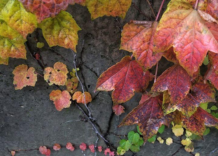 Fall Decoration 8