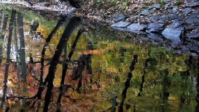 Fall Reflects in Muddy River 2a