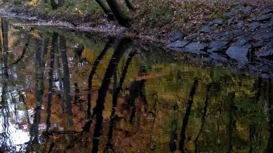 Fall Reflects in Muddy River 2b